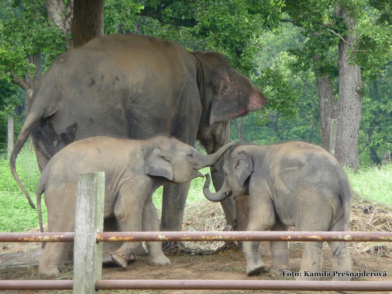 Národný park Chitwan