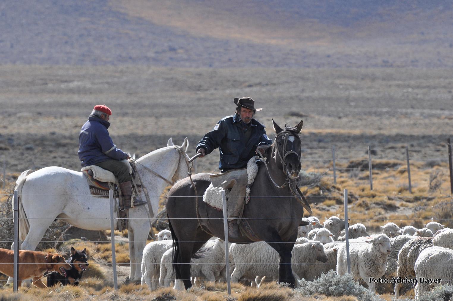 Patagonia - Gaucho
