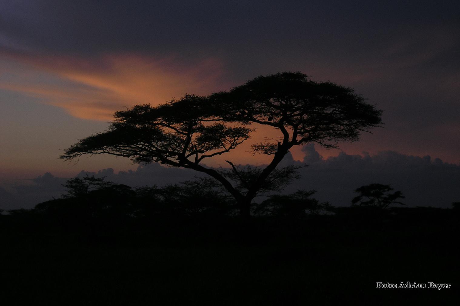 Serengeti - západ Slnka z Ndutu lodge