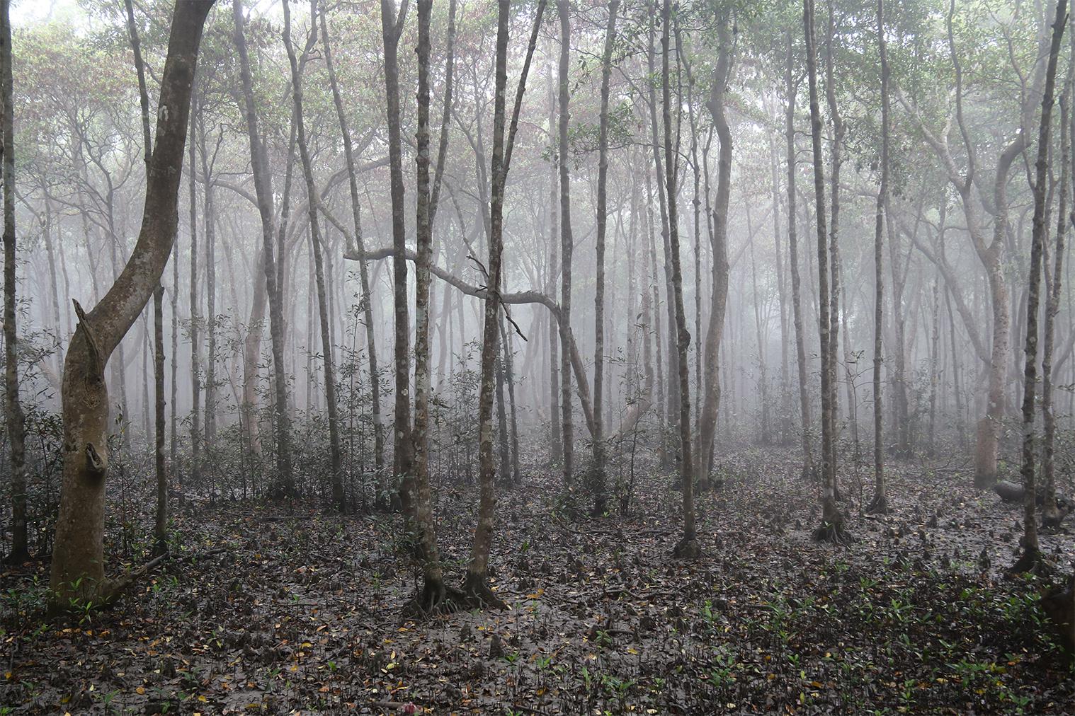 Najväčší mangrovníkový les na svete