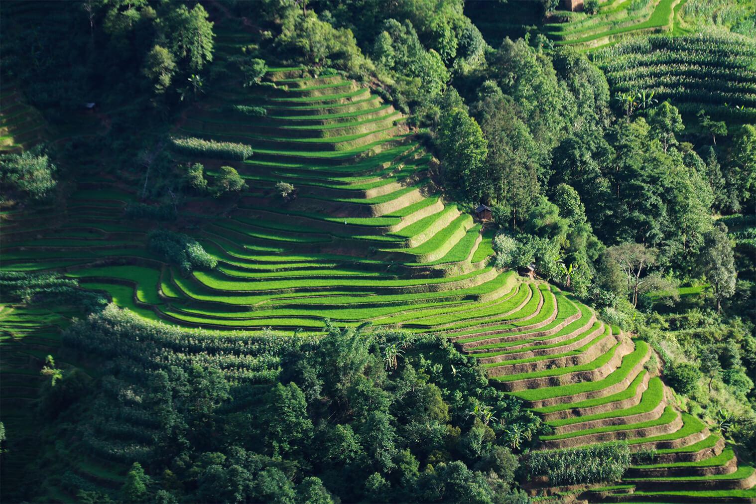 Ryžové polia Yuanyang
