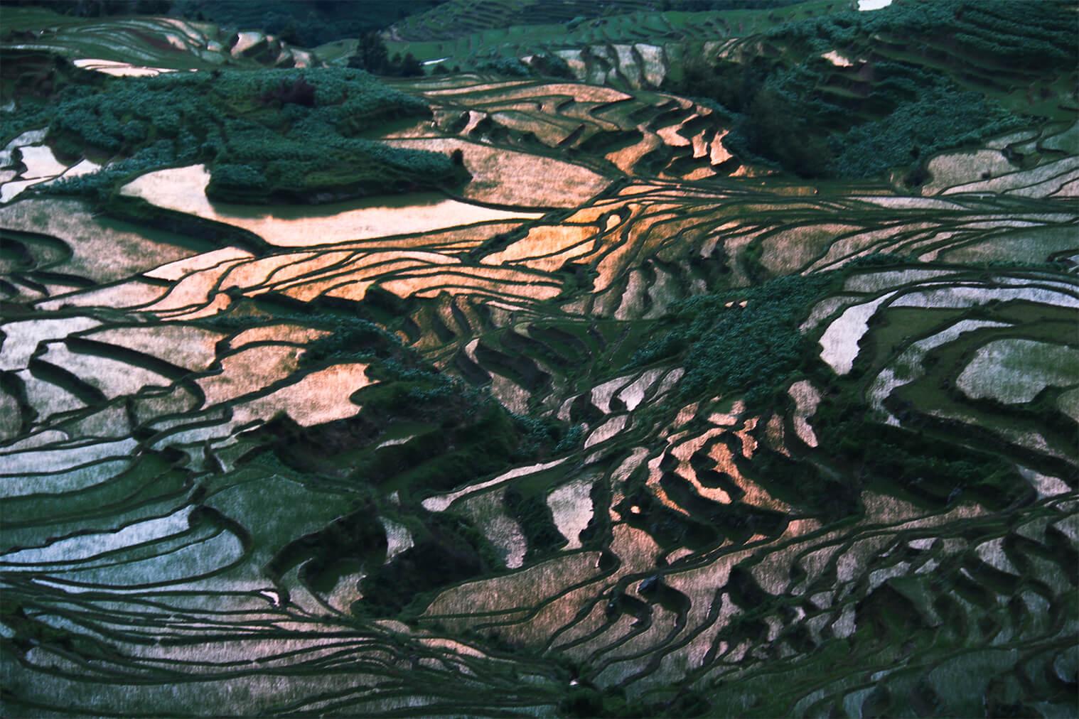 Ryžové polia Yuanyang pri východe Slnka