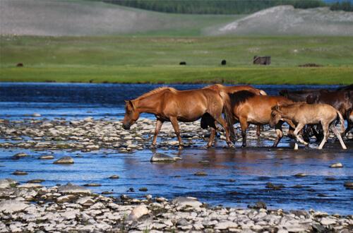 Na koňoch za kočovným kmeňom Tsaatanov