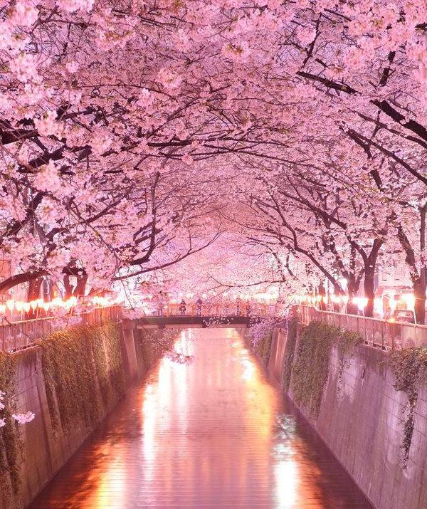 Tip na jarnú dovolenku: Japonsko