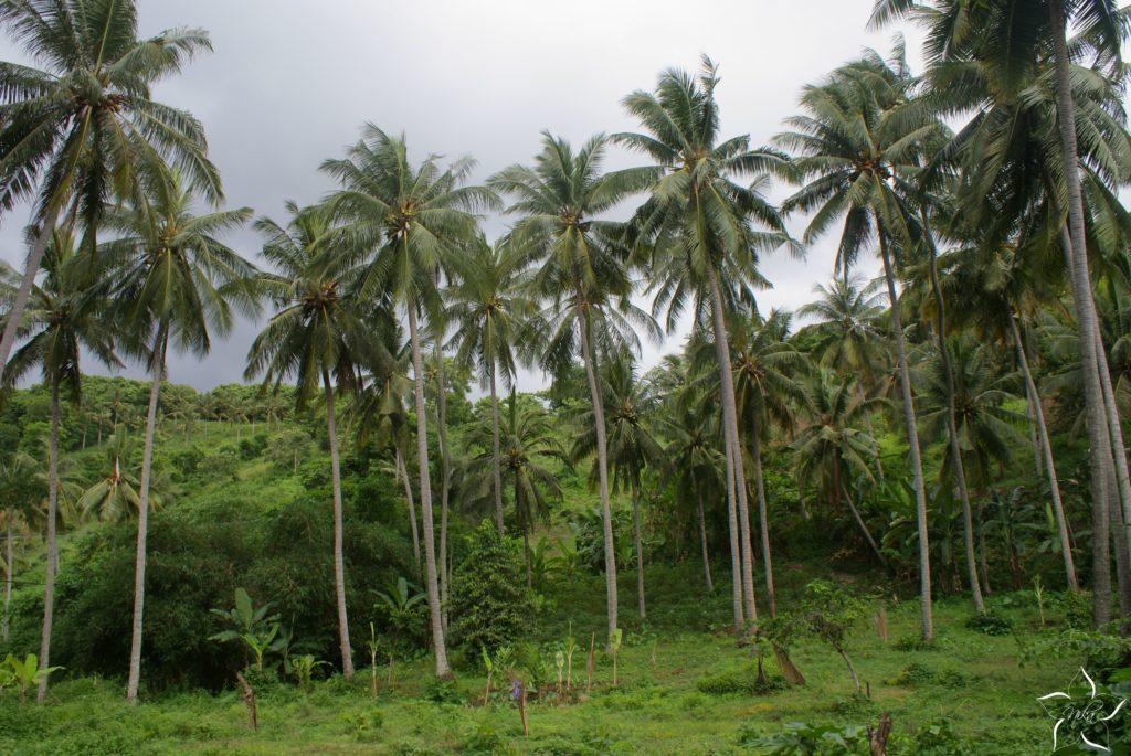 Je Bali naozaj raj na zemi? Pre a proti surferského ostrova
