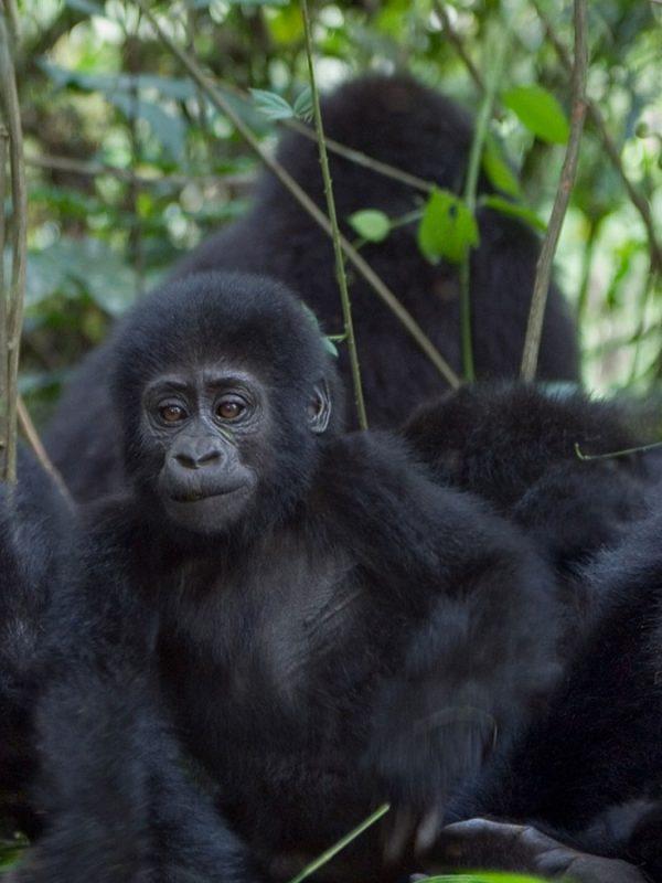 Kongo: Gorily a výstup na aktívnu sopku
