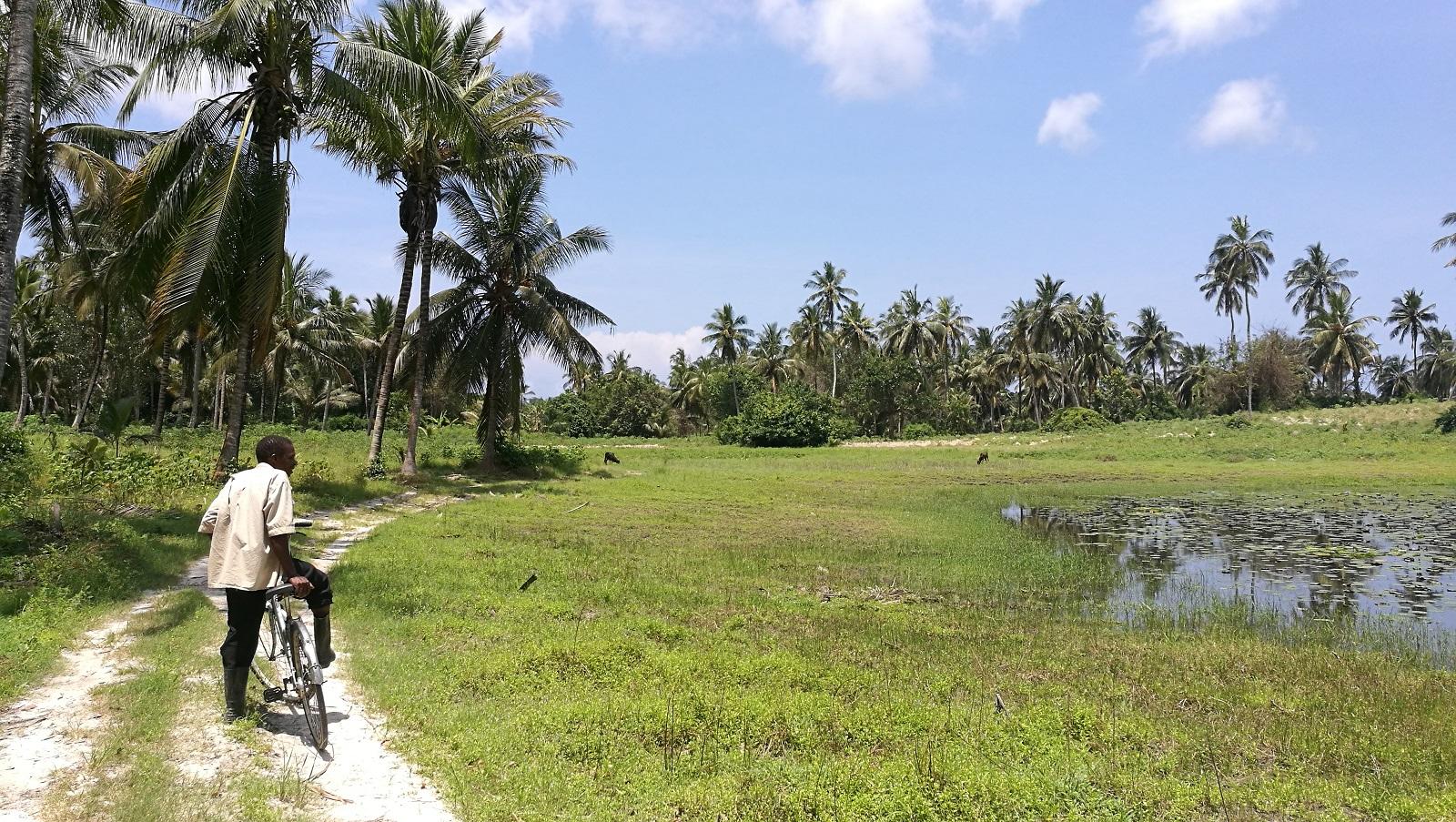 Ostrov Pemba je krajšou sestrou Zanzibaru