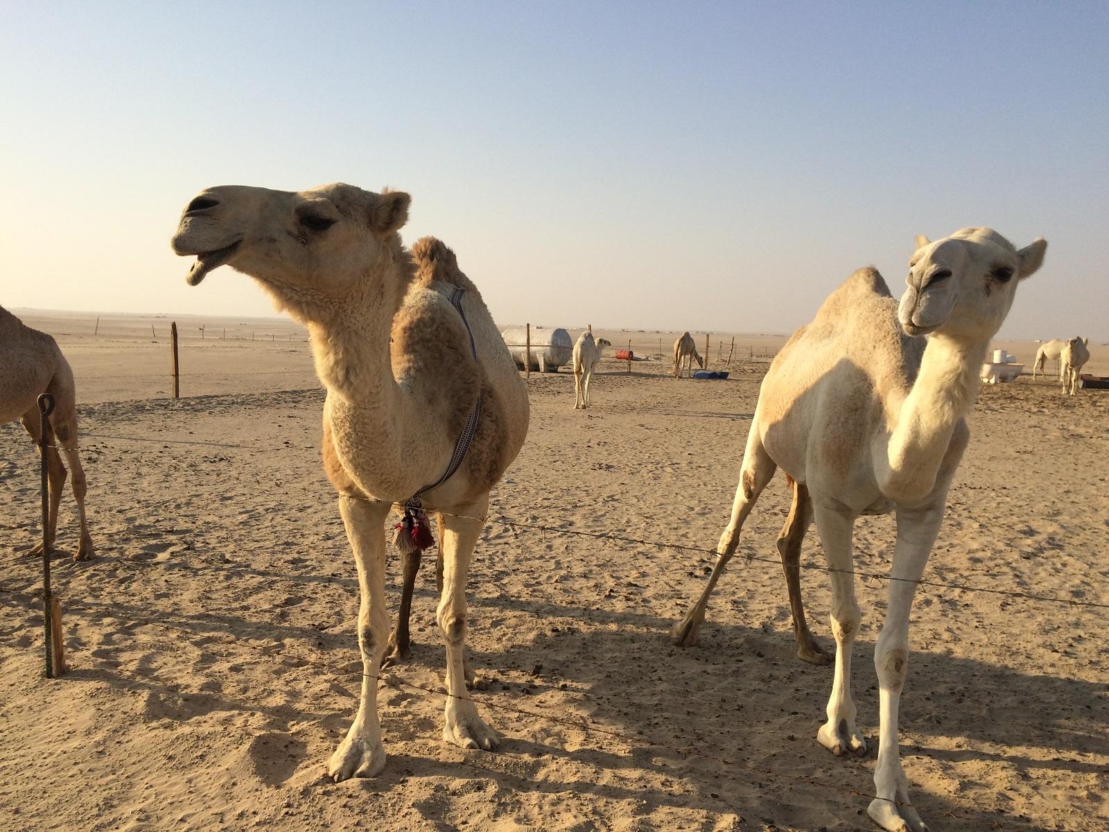 Kuvajt – cestovateľské rady, tipy a itinerár