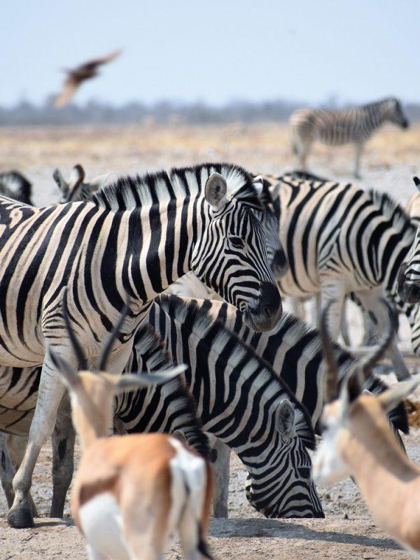 Namíbia - cestovateľské rady a tipy