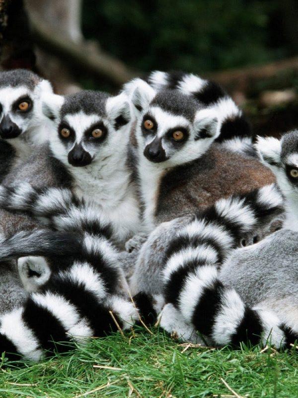 Madagaskar - cestovateľské rady, tipy a itinerár