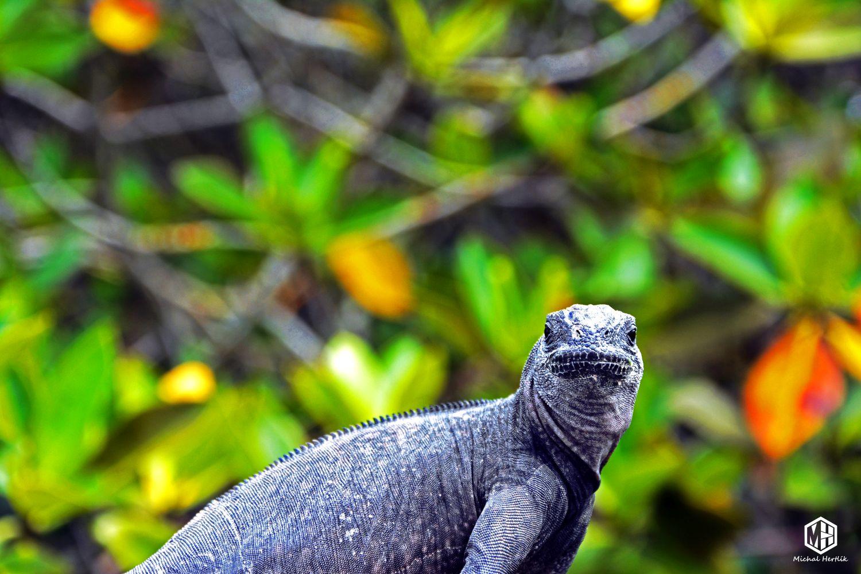 Galapágy - unikátny raj nielen jašterov a korytnačiek