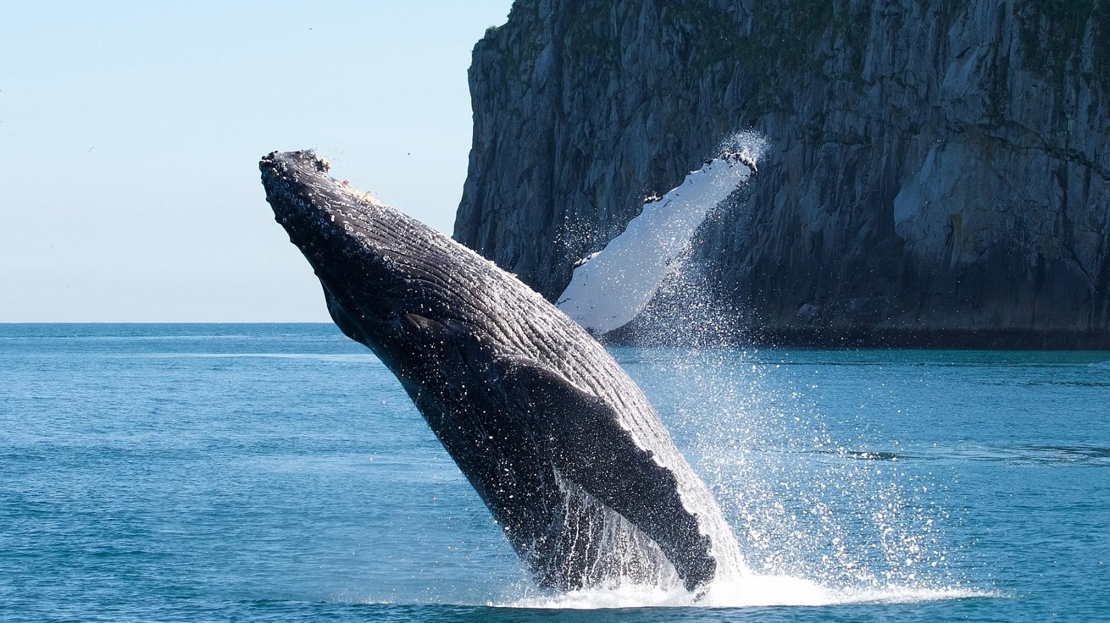 Najlepšie miesta sveta na pozorovanie veľrýb