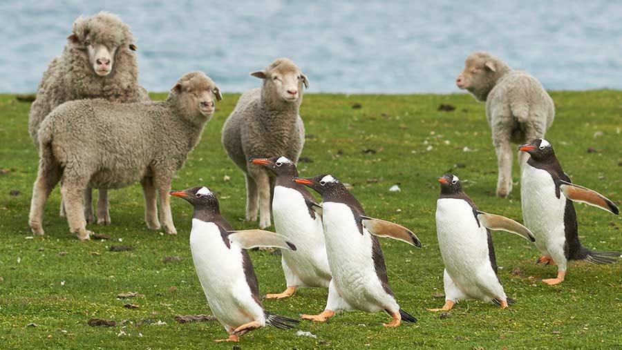 Falklandy – cestovateľské rady, tipy a itinerár